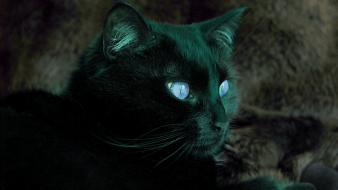 Cats cat eye Wallpaper