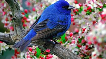 Flowers birds branches wallpaper