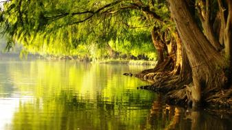 Landscapes trees rivers ricer wallpaper