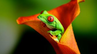 Nature frogs wallpaper