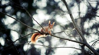 Nature winter trees animals outdoors squirrels Wallpaper