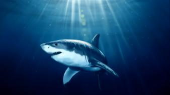 Paintings fish sharks artwork underwater sea wallpaper