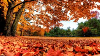 Red forest orange canada parks fallen leaves wallpaper
