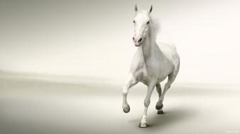 Water running white horse wallpaper