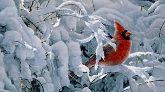 Winter birds cardinal northern wallpaper