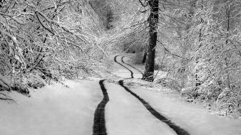 Winter snow trees forests roads snowy wallpaper