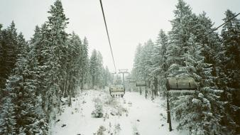 Winter snow trees forests ropeway pine wallpaper