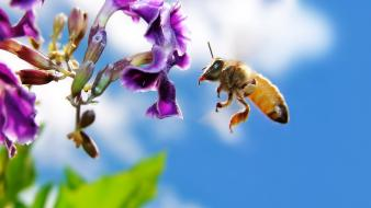 Bee On Flower Screen wallpaper