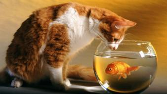 Cat And Fish Hd wallpaper