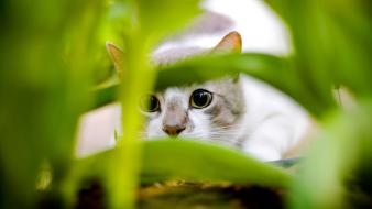 Cat Hiding Wallpaper