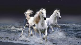 Mystic Horses Wallpaper