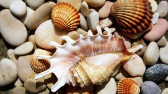 Pebbles seashells Wallpaper