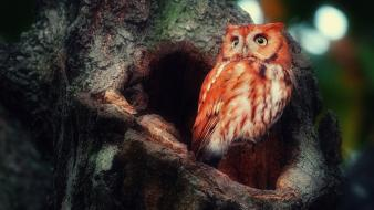 Animals birds forests owls red wallpaper