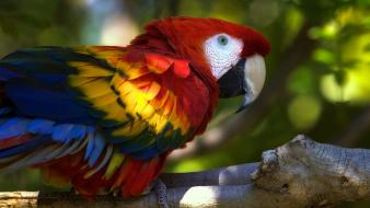 Animals parrots macaw wallpaper