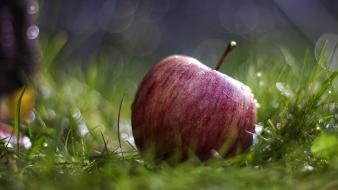Apple inc. fruits grass macro Wallpaper