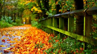 Beautiful autumn pictures wallpaper