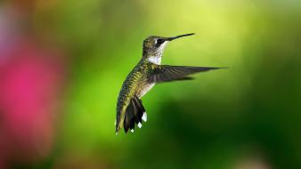 Birds bokeh hummingbirds colibri Wallpaper