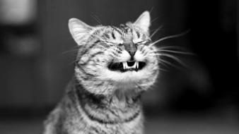 Black and white cats funny singers wallpaper