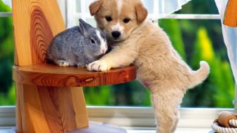 Cute puppy and bunny wallpaper