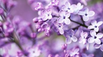 Cute purple flowers Wallpaper