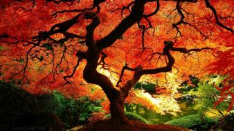 Fall tree wallpaper