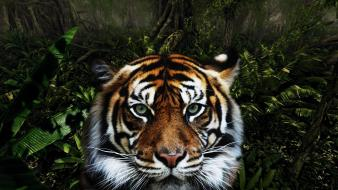 Jungle animals tigers wallpaper