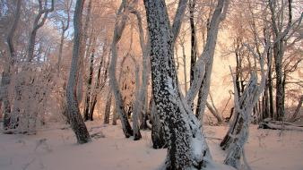 Light landscapes nature winter forest czech republic wallpaper