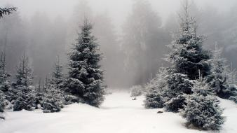 Snow fog spruce pine trees wallpaper