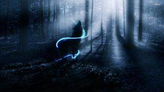 Wolf howling at night Wallpaper
