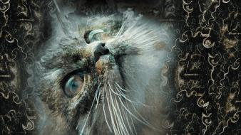 Animals artwork cats digital art feline wallpaper
