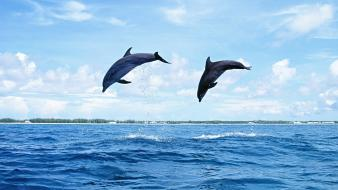 Animals dolphins jumping wallpaper