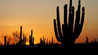 Cactus deserts silhouettes sunset wallpaper