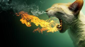 Cats fire photo manipulation wallpaper