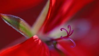Close-up flowers macro nature red wallpaper