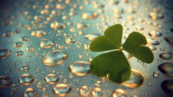 Clover green leaves water wallpaper