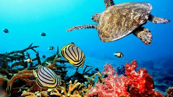 Coral reef animals wallpaper