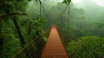 Costa rica clifton 2009 canopy hanging bridge wallpaper