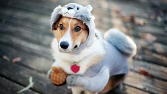 Costume animals dogs funny Wallpaper