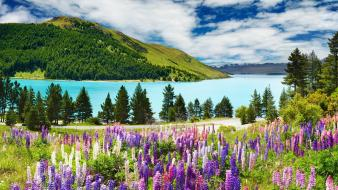 Flowers grass lakes landscapes mountains Wallpaper