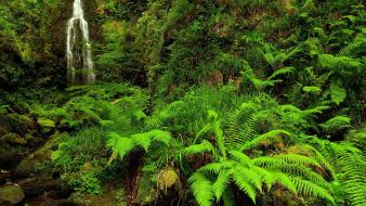 Forests ferns waterfalls wallpaper
