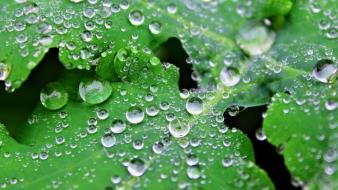 Fresh dew drops leaves nature wallpaper