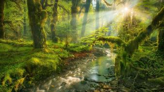 Garden spirit creek sun rays morning view Wallpaper