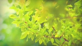 Green nature trees leaves branches branch wallpaper