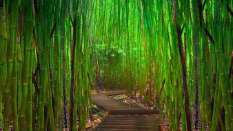 Hana bamboo forests green landscapes wallpaper