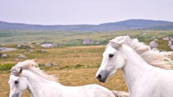 Ireland national geographic animals horses landscapes wallpaper