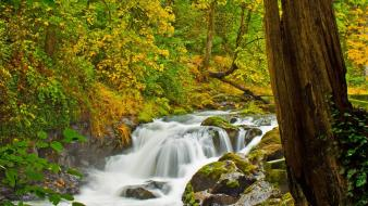 Landscapes nature trees forests falls waterfalls creek Wallpaper
