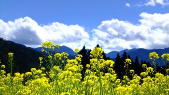 Mountains clouds landscapes nature trees flowers yellow skies Wallpaper