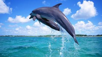 Nature animals dolphins pair wallpaper