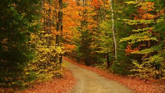 Nature forest roads autumn wallpaper
