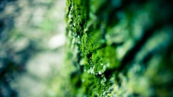 Nature moss depth of field wallpaper